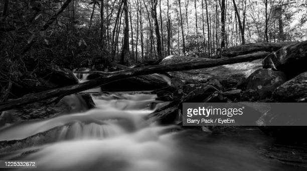 water falling from rocks in forest - barry wood stock pictures, royalty-free photos & images