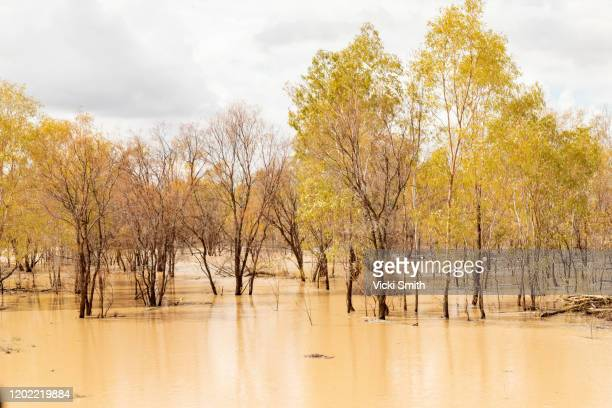 water flooding from a stream in among the burnt trees with tree reflections on the water - floods and drought stock pictures, royalty-free photos & images