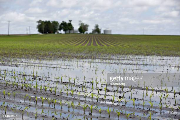 Water floods a cornfield in Malden Illinois US on Wednesday May 29 2019 Claims known as prevented plant pay out when farmers are unable to sow crops...