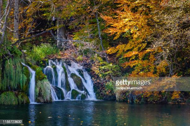 water flowing across mossy cascades and colorful trees - reflection pool stock pictures, royalty-free photos & images