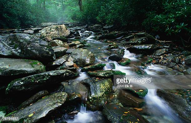 water flowing over rocks in alum creek, great smoky mountains national park, tennessee, united states of america, north america - alumni stock pictures, royalty-free photos & images