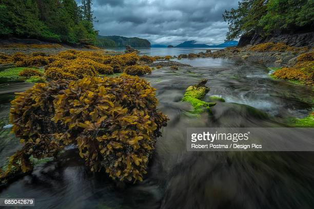 Water flows toward the ocean from a forest stream at low tide