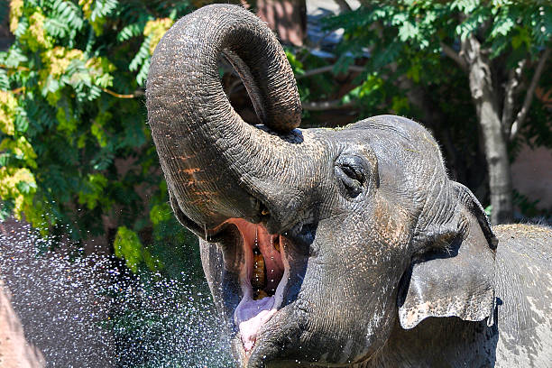 Free Kerala Elephant Images, Pictures, And Royalty-Free