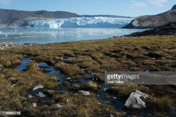 Water from the Greenland ice sheet flows through heather and peat as the Eqip Sermia Glacier stands behind during unseasonably warm weather on August...