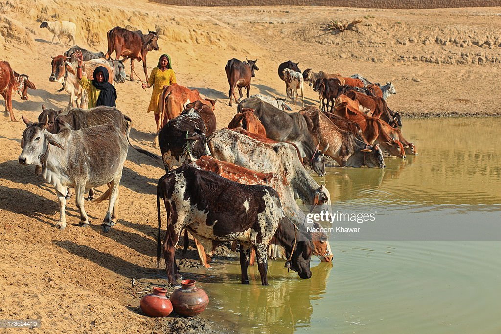 Water  hole : Stock Photo