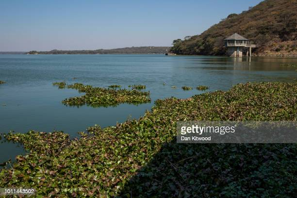 Water Hyacinth collects by the side of Lake Chivero on August 5 2018 in Harare Zimbabwe Lake Chivero is 32km South West of Zimbabwe's capital Harare...