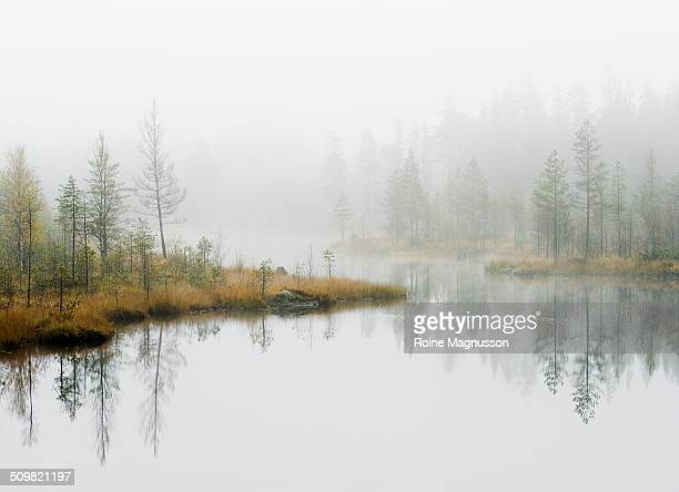 Water in forest