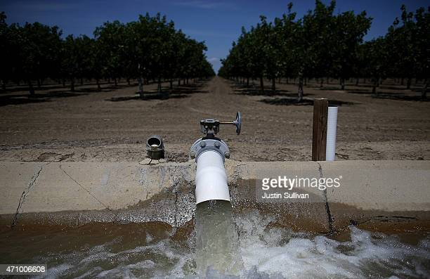 Water is pumped into an irrigation canal at an almond orchard on April 24 2015 in Firebaugh California As California enters its fourth year of severe...