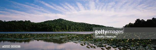 water lilies on lake - timothy hearsum stock pictures, royalty-free photos & images