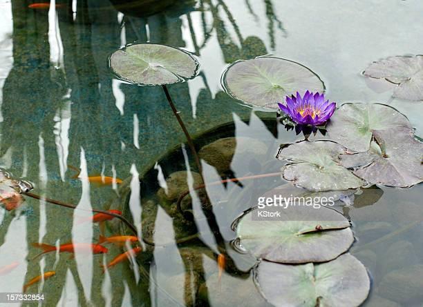 Lillies d'eau et de poissons rouges sous un reflet de bain