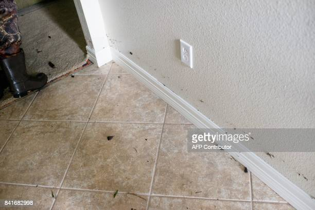 Water marks the walls of John Leblanc's flooded home in Port Arthur Texas on Thursday September 1 2017 Stormweary residents of Houston and other...