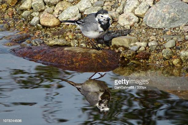 water mirror - sahne stock pictures, royalty-free photos & images