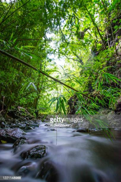 water moving downstream over lava rocks under a bamboo forest - hannah brooks stock pictures, royalty-free photos & images