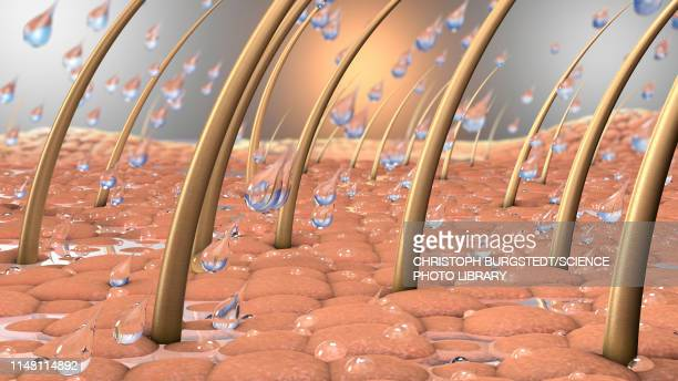 water on human skin, illustration - stratum corneum stock pictures, royalty-free photos & images