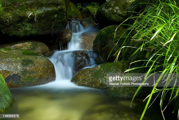 Water over boulders in rainforest