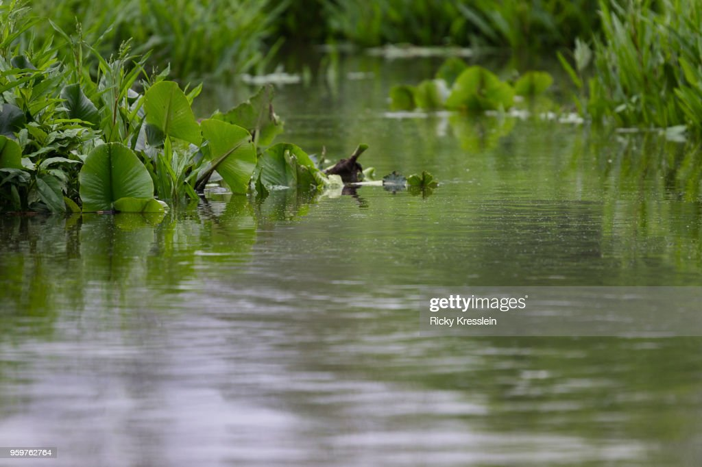Water Plants : Foto de stock