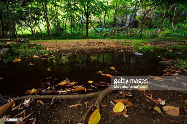 Water pond with yellow leaves in front of trees and waterfalls