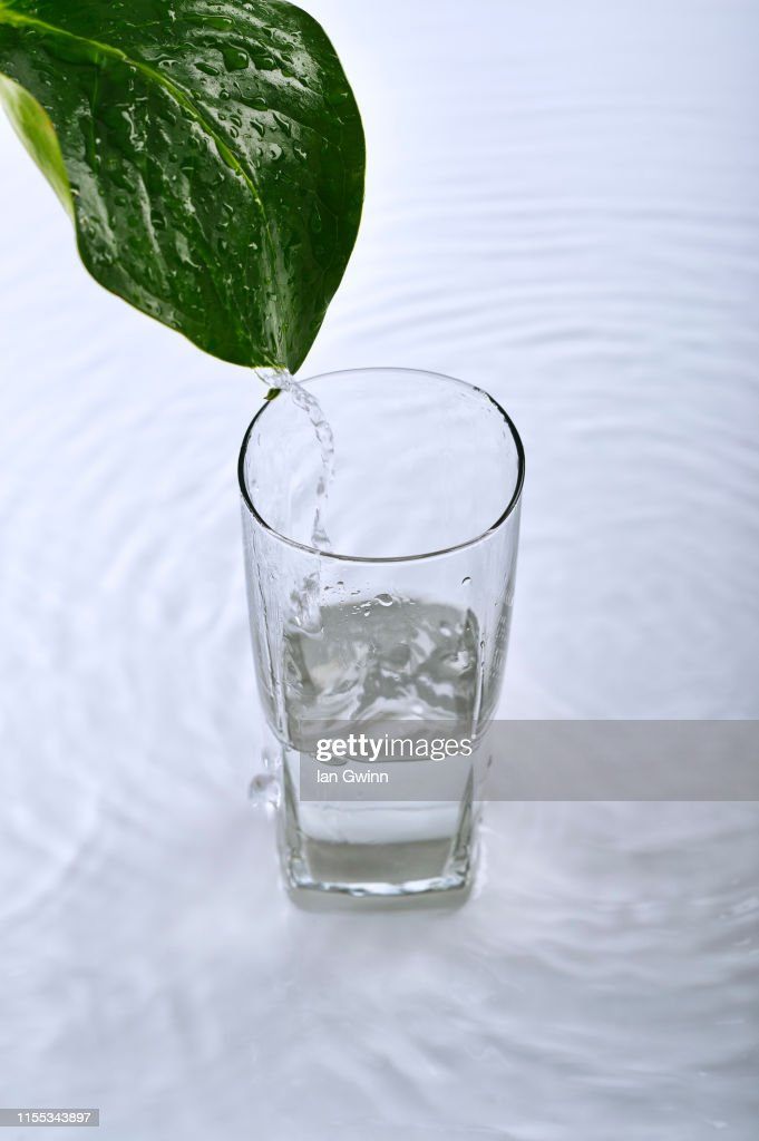 Water Pouring off of Leaf : Stock Photo
