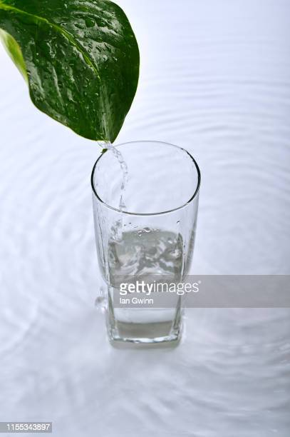 water pouring off of leaf - ian gwinn stockfoto's en -beelden