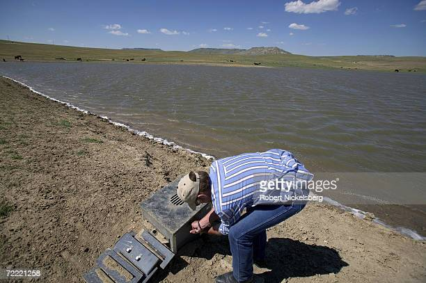 Water pumped from numerous coal bed methane wells surfaces in a large reservior to be used by grazing cattle on the open prairie on June 14 2006 in...