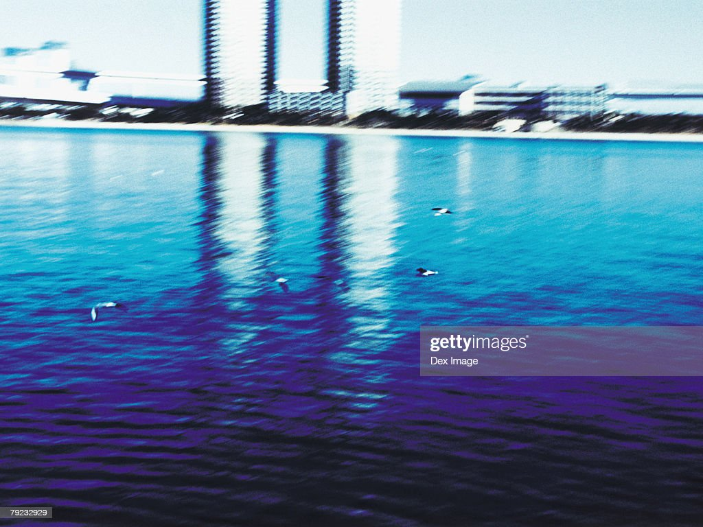 Water reflection of building structures, seagulls flying : Stock Photo