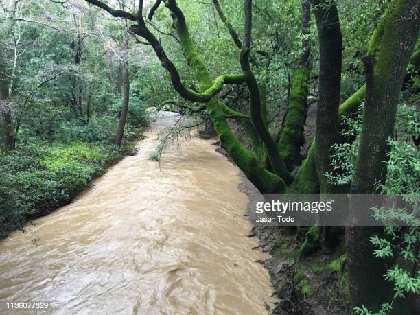water running through waterway creek after heavy rain - jason todd stock photos and pictures