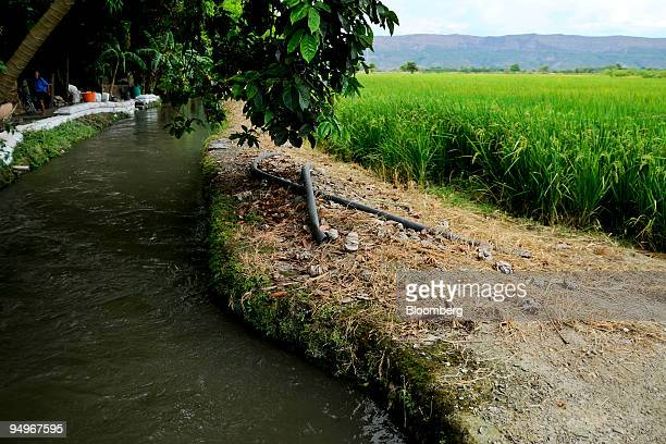 Water runs along a rice field near the town of El Espinal Tolima Colombia on Saturday Aug 29 2009 AngloGold Ashanti Ltd plans to spend as much as $1...