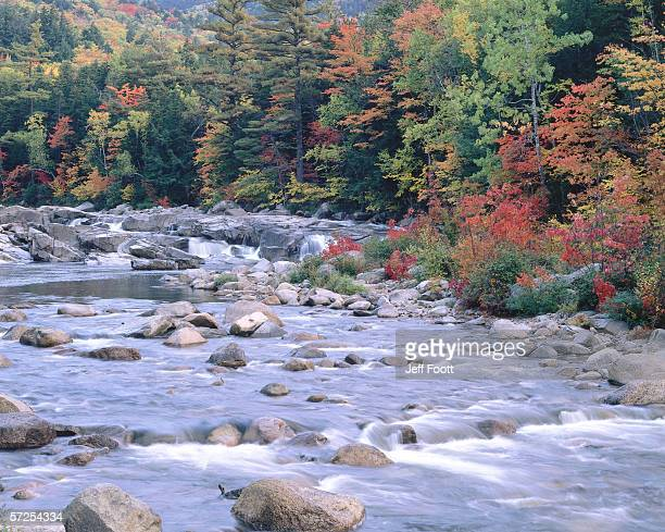 water runs through lower falls of river surrounded by fall foliage. swift river, white mountains national forest, new hampshire. - swift river stock photos and pictures