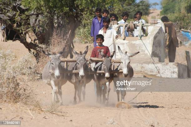 Water scarcity plays a vital role in shaping life in all parts of Thar. Well is the only source of water for animals and humans in the true desert...