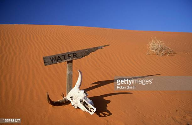 Water sign and cow skull in the desert
