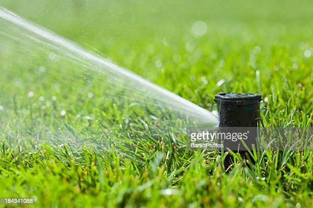 Water Sprinkler Head Spraying New Grass