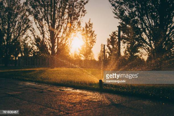 Water sprinkler in a garden at sunset