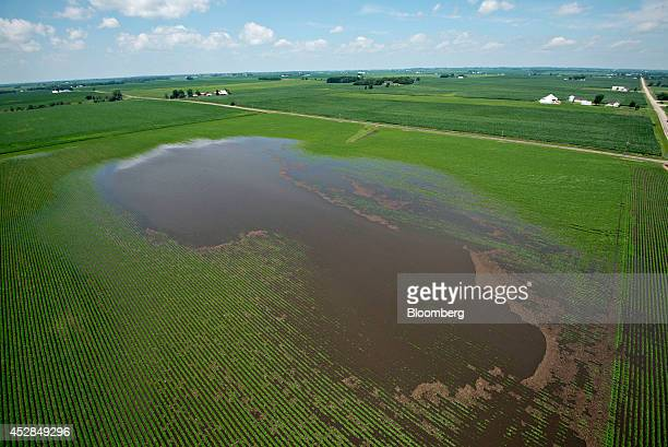 Water stands in a flooded soybean field near Wyanet Illinois US on Tuesday July 1 2014 A powerful wind storm known as a derecho swept from the...
