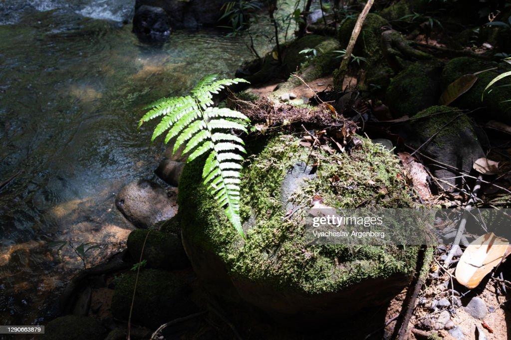 Water stream in Borneo jungle, Malaysia : ストックフォト