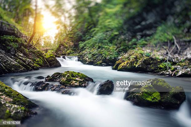 water stream - spring flowing water stock pictures, royalty-free photos & images