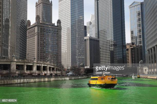 A water taxi navigates the Chicago River shortly after it was dyed green in celebration of St Patrick's Day on March 11 2017 in Chicago Illinois...