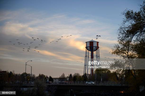 water tower near the bridge and large group of canada goose flying through idaho falls, idaho, usa - idaho falls stock photos and pictures