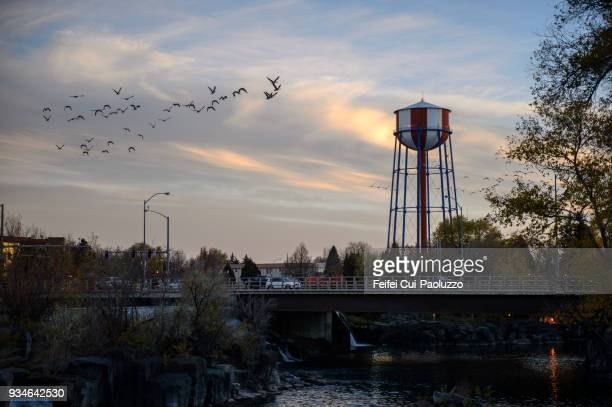 water tower near the bridge and large group of canada goose flying through idaho falls, idaho, usa - small town america stock pictures, royalty-free photos & images