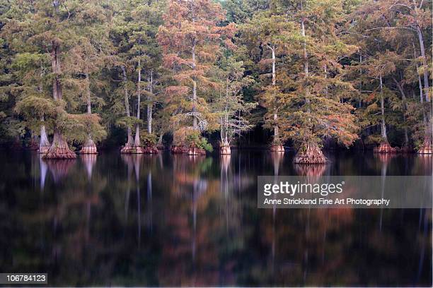 water trees - shreveport stock pictures, royalty-free photos & images
