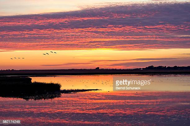 waterbird reserve sunset - bernd schunack stock photos and pictures