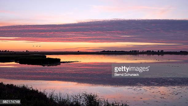 waterbird reserve sunset - bernd schunack stock pictures, royalty-free photos & images