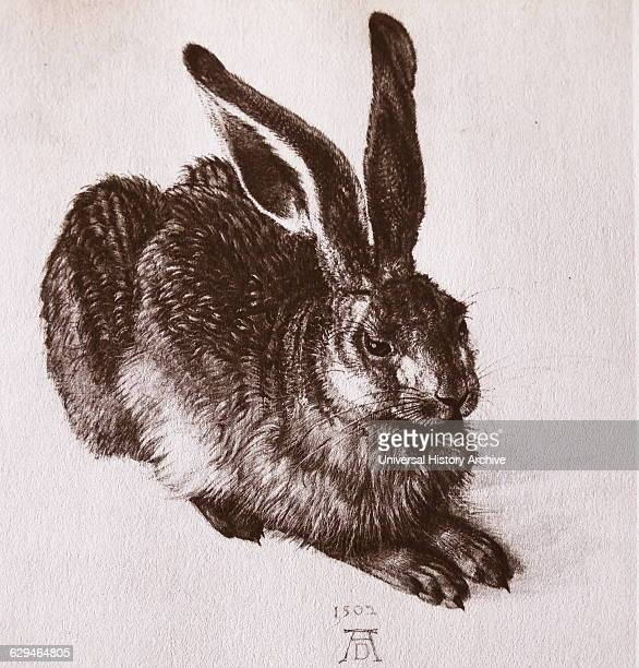 Watercolour of a young hare by Albrecht Dürer painter printmaker and theorist of the German Renaissance Dated 16th Century