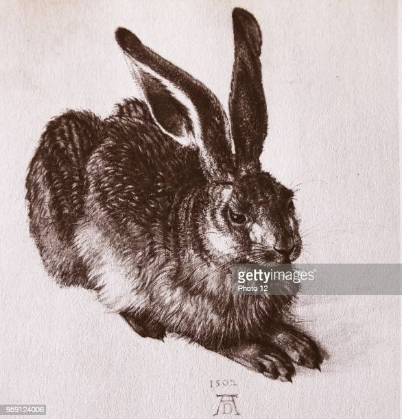 Watercolour of a young hare by Albrecht Durer painter printmaker and theorist of the German Renaissance Dated 16th Century