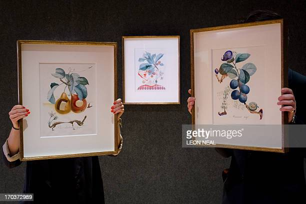 Watercolour paintings by late Spanish artist Salvador Dali entitled 'Fruits Troues' 'Cerises Pierrot' and 'Prunier Hatif' are displayed at Bonham...