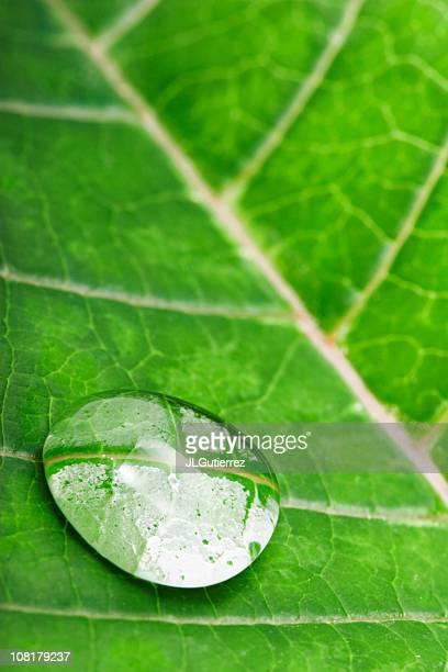 Waterdrop and leaf