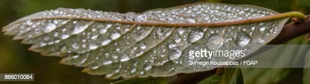 Waterdrop on green leaf