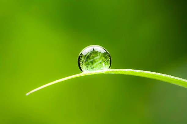 waterdrop.  water drop leaf environmental conservation balance green nature - 平衡 個照片及圖片檔