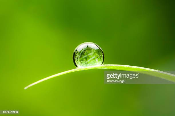 waterdrop.  water drop leaf environmental conservation balance green nature - focus concept stock pictures, royalty-free photos & images