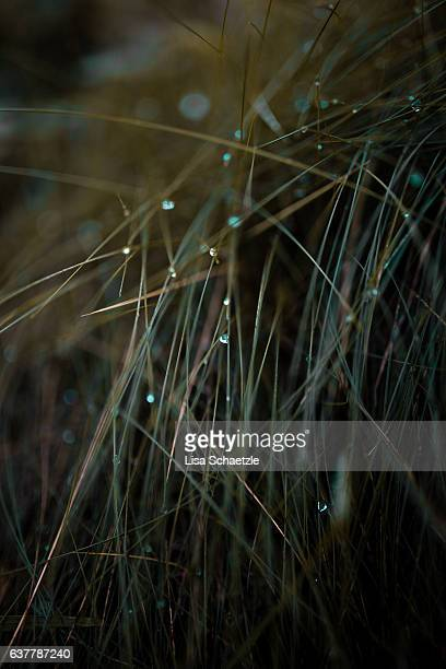 Waterdrops on blades of grass.