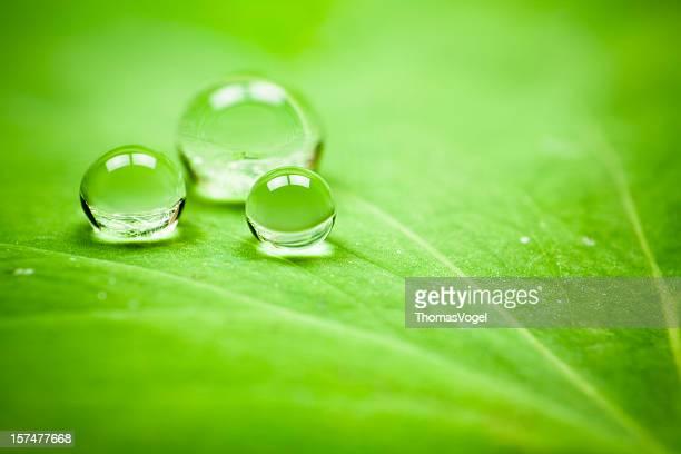 waterdrops auf Blatt. Wasser Tropfen grüner Natur Makro waterdrop